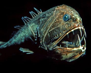 Skräckinjagande djuphavsfiskar