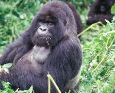 Utrotningshotade djur