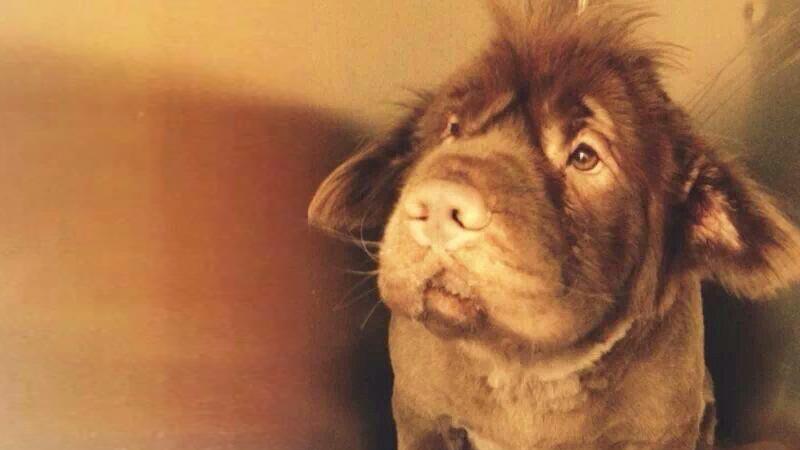 sötaste blandrashundarna