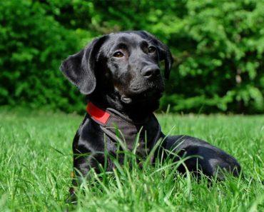 Sveriges populäraste hundraser