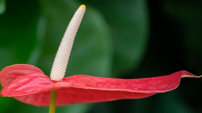 Växter som rensar luften