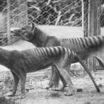 10 djur som utrotats av människan