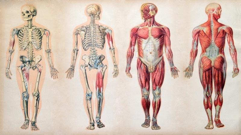 10 saker du inte visste om människokroppen