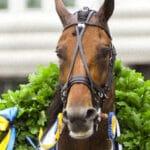 Topp 5: Vinstrikaste svenskfödda travhästarna genom tiderna